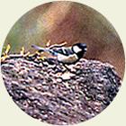 田沢高原付近で見られる鳥